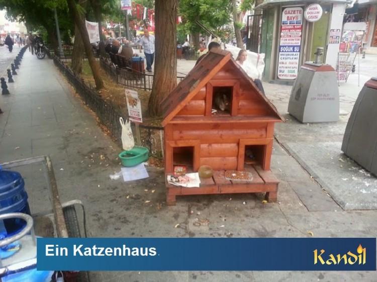 Katzenhaus