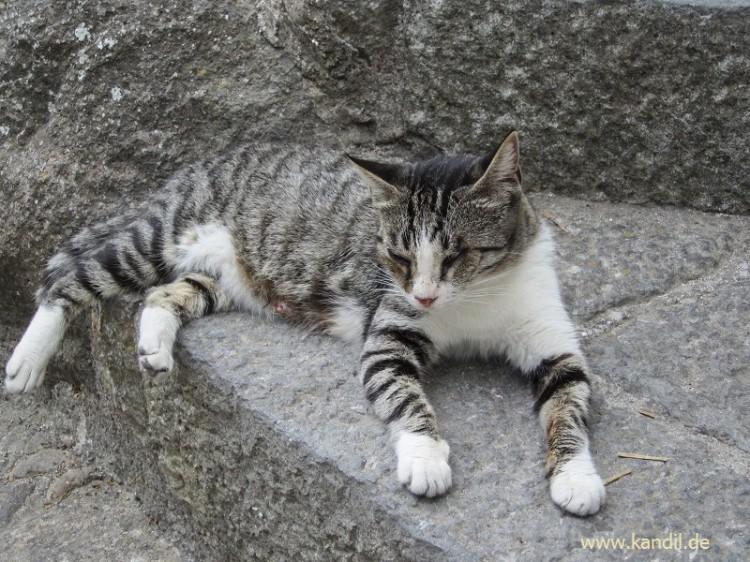 Ein Denkmal für eine Katze