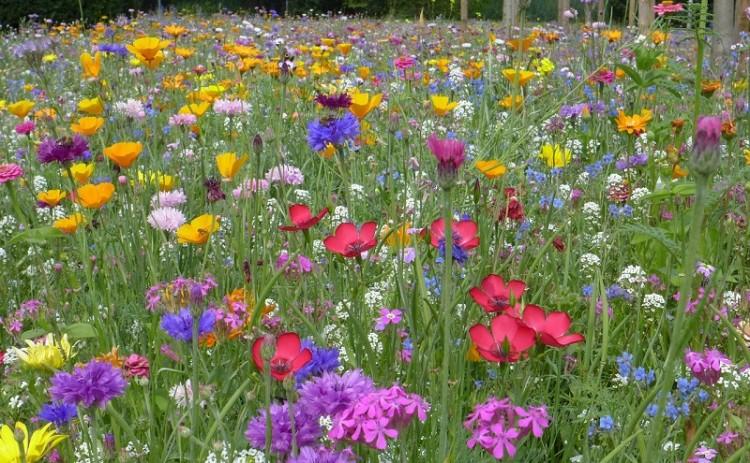 Die Sprache der Farben und Blumen