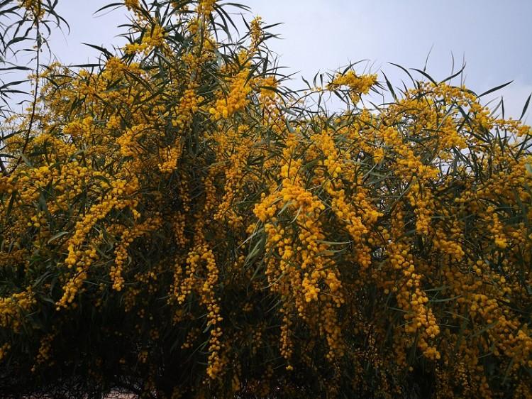 Empfindliche Mimosen