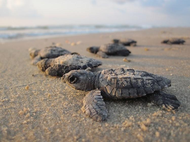 Du Schildkröte!